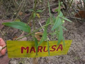 Marusa
